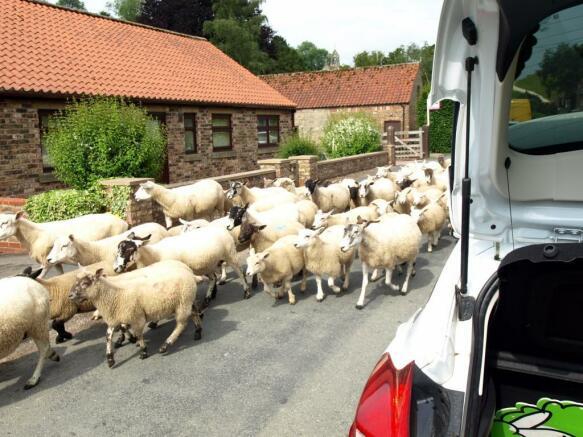Local High Street Sheep!