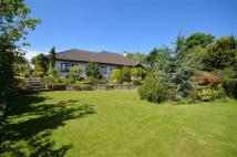 4 bed Detached Bungalow for sale in Gorsedd, CH8