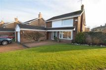 Detached property for sale in St Peters Park, Northop...