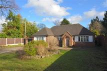 Detached Bungalow for sale in Wern Fechan, LL15