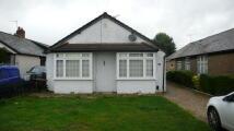 3 bed Detached Bungalow to rent in Royston Way, Burnham...