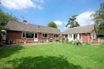 Detached Bungalow for sale in Bucks Horn Oak, FARNHAM