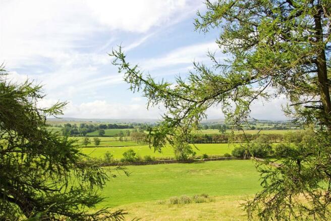 Frint View
