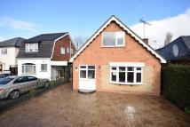 4 bed Detached Bungalow to rent in Elm Avenue...
