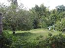 property for sale in Siaton