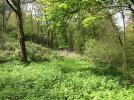 Far garden