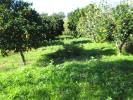 Idanha-a-Nova Farm Land