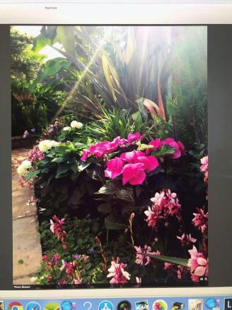 Summer garden 2