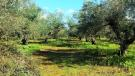 Land in Marathopoli, Messinia...