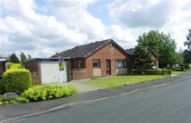 Detached Bungalow to rent in Hacking Drive, Longridge