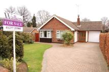 Detached Bungalow for sale in The Paddocks, Ingatestone