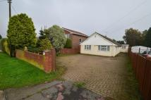 Detached Bungalow to rent in Tunbury Avenue...