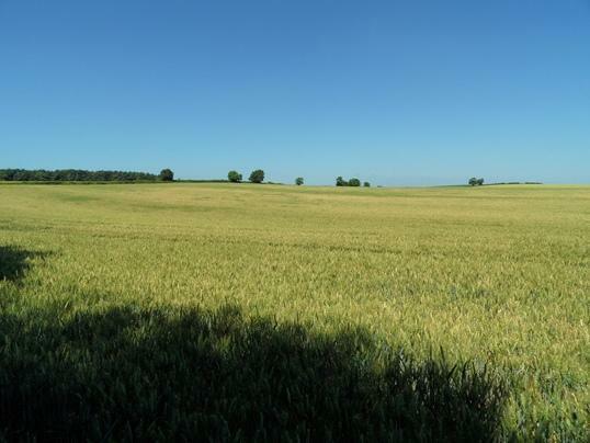 Loscar Field - 33.05 acres (13.37 hectares)