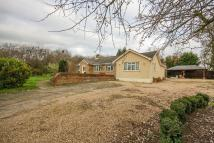 De Beauvoir Chase Bungalow for sale