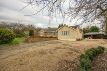 De Beauvoir Chase Detached Bungalow to rent