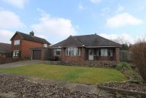 Detached Bungalow for sale in Springfield Road, Leek...