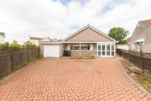 Detached Bungalow to rent in Cefn Court, Rogerstone...