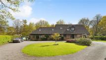 Detached Bungalow for sale in Shaws Lane, Southwater...