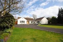 Bungalow in Anglesey Drive, Poynton...