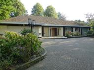 Bungalow to rent in Hilltop, Hale