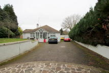 Detached Bungalow in The Woodlands...