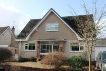 Detached home to rent in Carcluie Crescent...