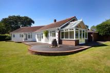 Bungalow to rent in Sparrow Row, Chobham...