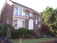Withdean Rise property to rent