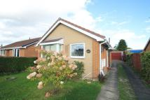 Detached Bungalow in William Bradford Close...