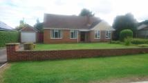 3 bed Detached Bungalow to rent in Clarendon Road...