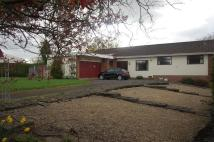 Detached Bungalow for sale in Wernddu Road, Ammanford
