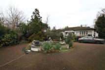 4 bed Detached Bungalow in Camlet Way, Hadley Wood...