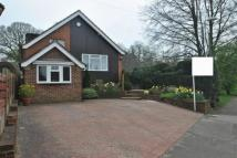 4 bed Detached Bungalow in Main Road, Knockholt...