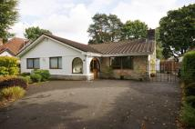 3 bed Detached Bungalow to rent in Glenwood Road...