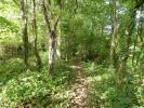 WOODED COPSE