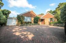 Bungalow for sale in Cricket Hill Lane...