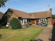 4 bed Detached Bungalow for sale in The Avenue, Wivenhoe