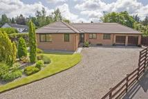 Detached Bungalow in 5B Mare Park, Muirton...