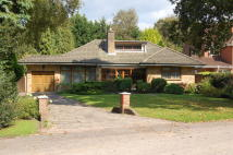 Detached Bungalow for sale in Brackendale Close...