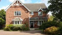Detached property in Redshank Drive...