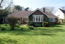 Bungalow for sale in Downton Lane, Downton...