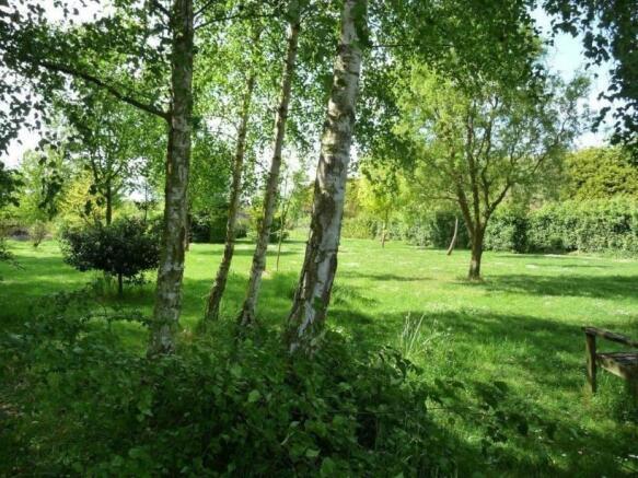 Canopy Woodland