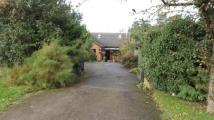 Bungalow for sale in Forest Road, Hartwell...