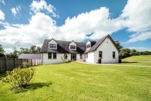 Detached property for sale in Jerviswood Nursery...