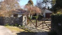 Bungalow for sale in Walwen, Lixwm, Holywell...