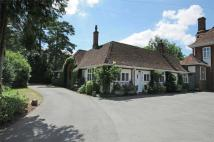 Semi-Detached Bungalow for sale in Arborfield Court...