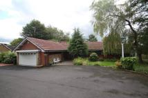 Detached Bungalow in Bamford Way, Bamford...