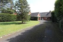 Detached Bungalow in 59, Norton Road, Norton
