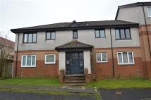 Flat to rent in Daniel Mclaughlin Place...