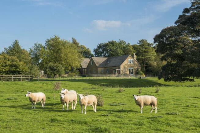 sheep and house.jpg